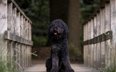 Hoe fotografeer je een zwarte hond?
