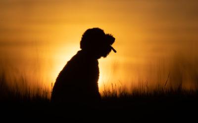 Waarom iedere hond geschikt is voor een fotoshoot