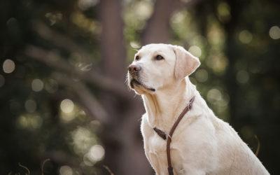 3 tips om zelf mooiere foto's te maken van jouw hond