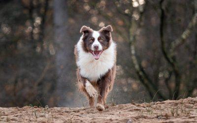 Mijn 5 favoriete locaties voor hondenfotografie in de Achterhoek